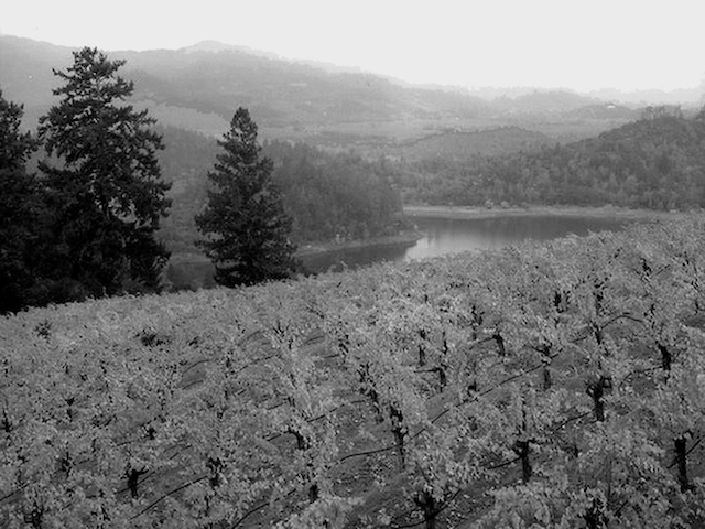 Sonoma_Vineyard_Morning