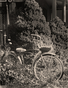 The_Bicycle_Garden_II